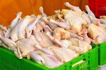 تحولات بازار مرغ و ماهی اعلام شد