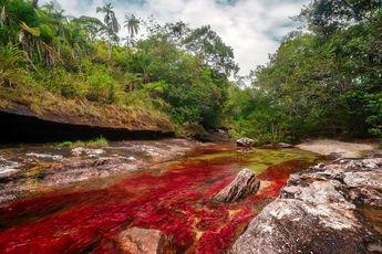 Rio Cano Cristales، رودخانه ی ۵ رنگ و خون آشام / عکس