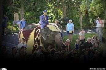 فیل سواری آقای داماد + عکس