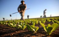 خبر خوب برای کشاورزان؛ سود، جریمه و کارمزد وام کشاورزان بخشیده شد