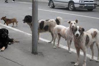 ناجی جان کودک گمشده، سگ ها بودند