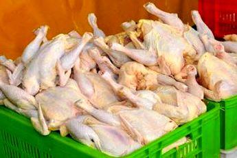 مرغ در آستانه شب عید گران نمی شود