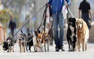 سگگردانی در تهران ممنوع شد