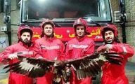 یک بهله عقاب عظیم الجثه در مشهد زنده گیری شد