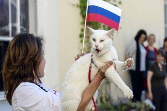 پیشگویی عجیب یک گربه : عربستان افتتاحیه را می برد