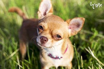 از کجا بفهمیم حیوان خانگیمان از ما متنفر است؟