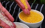 سهم صفر درصدی ایران از بازار جهانی بذر تراریخته